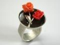 korallen-rose-1-dscn5988